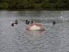 scuba-pictures-003